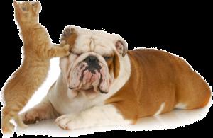 apex.animal.clinic.vet_cat.dog_dreamstimeextrasmall_19554325